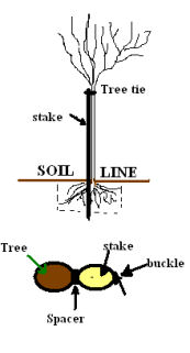 tree_planting_diagram